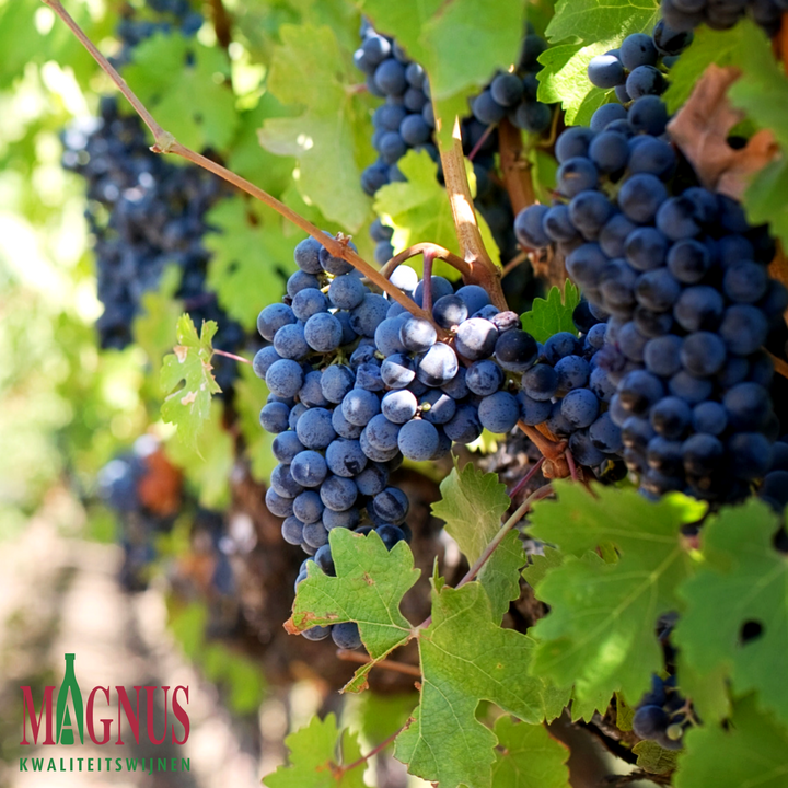 Magnus-wijnen-Leverancier-groothandel-horeca-belgie-online-horeca-beurs
